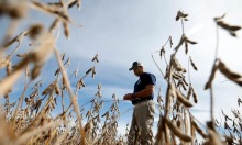 Khó khăn bủa vây nông dân Mỹ