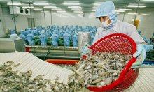 Xuất khẩu thuỷ sản có thể đạt 8,6 tỷ USD