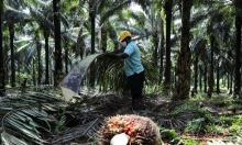 Chuỗi cung ứng nông sản Đông Nam Á đứt gãy
